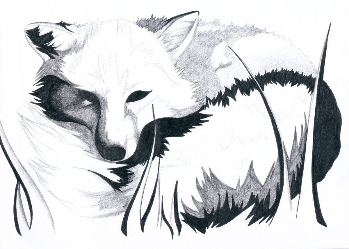 The image shows a piece of artwork by Jina Wallwork. It is a drawing of a fox. Stylistically this piece of artwork has links with realism.